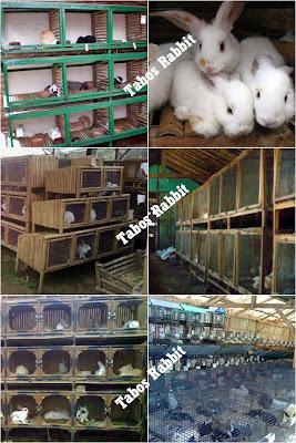daftar alamat peternak kelinci di indonesia