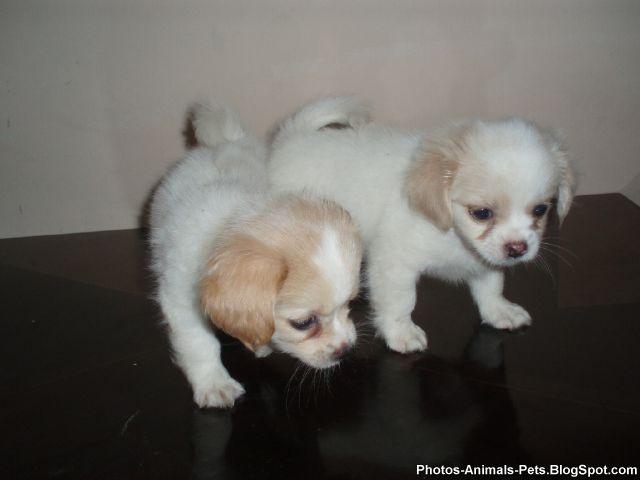 http://2.bp.blogspot.com/-y3mIzl3JHbs/TY3Z-6PfJ2I/AAAAAAAAAPk/WAP_pGel-HU/s1600/Photos%2B-puppy%2Bdogs_0005.jpg