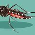 Como evitar um surto de dengue?