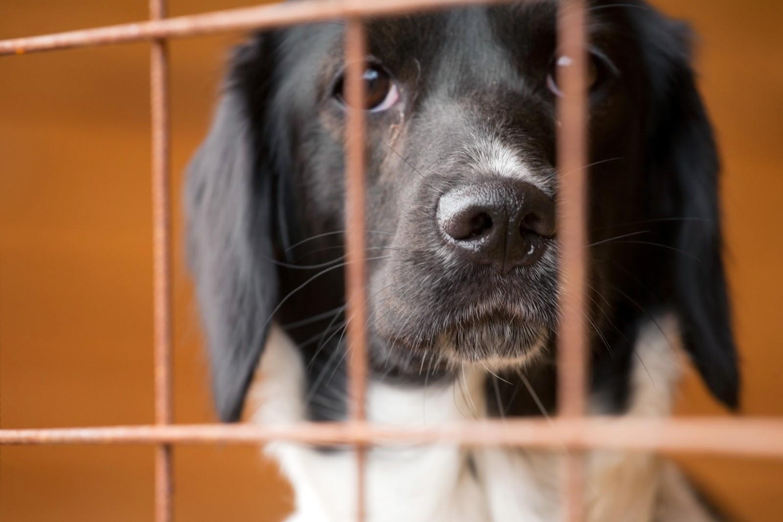 djurens rättigheter lagar