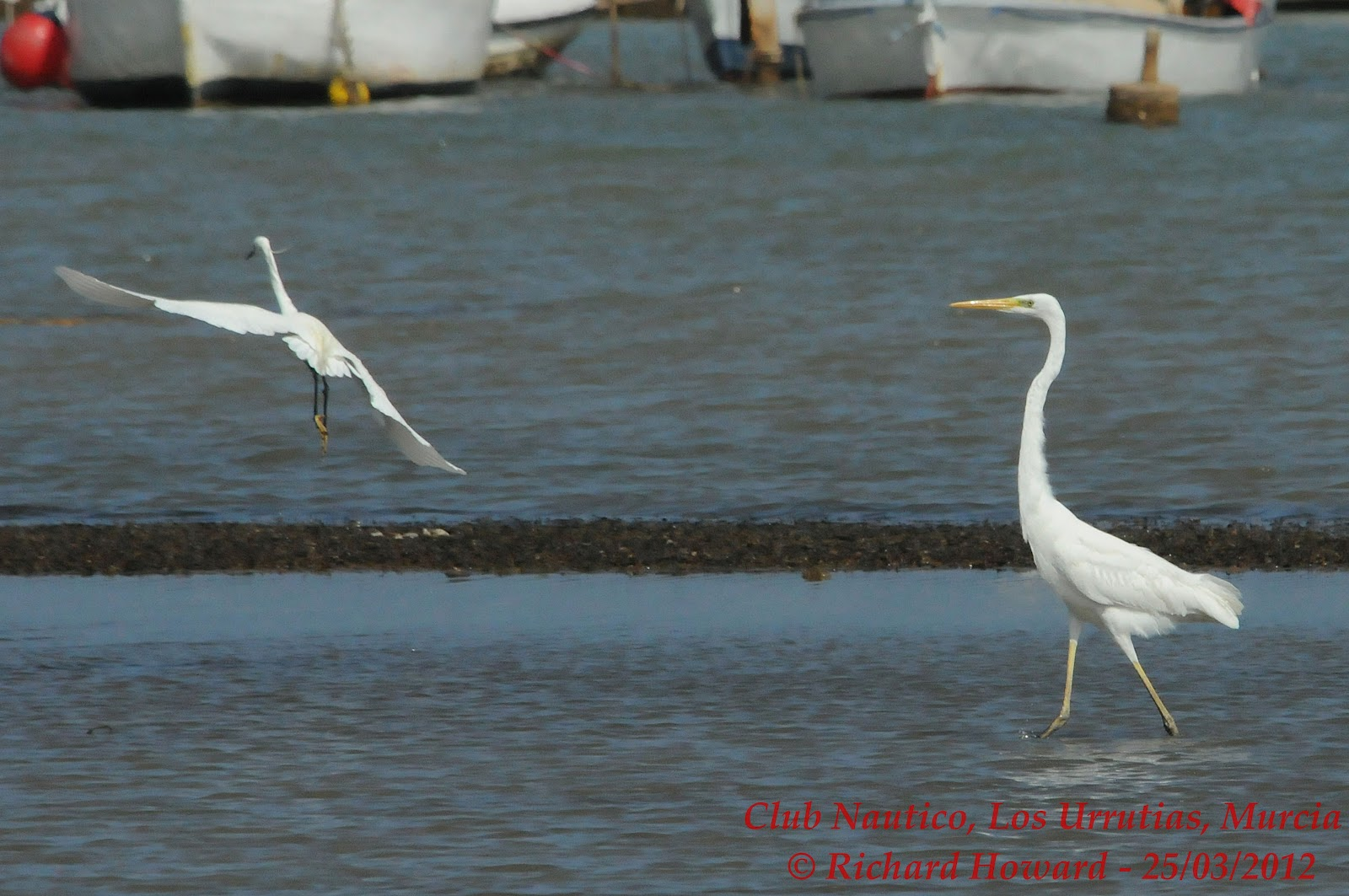 Birding In Murcia Spain And Uk Visits Sunday 25th