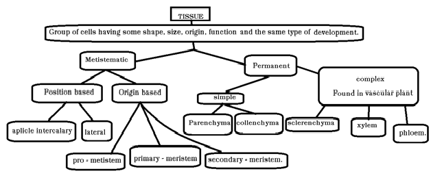 Omtex classes tree diagram three tree diagram three ccuart Images