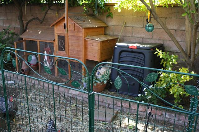 Small chicken coop, urban chickens