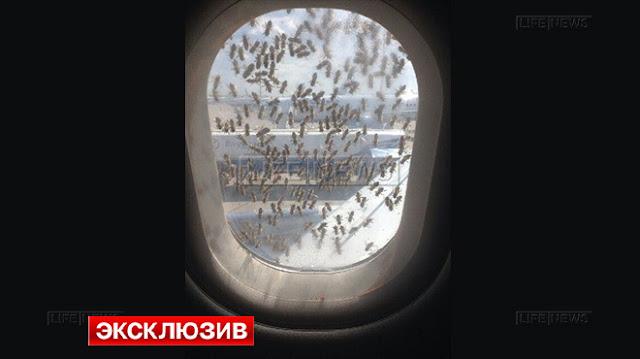 Тысячи пчел атаковали пассажирский аэробус во Внуково
