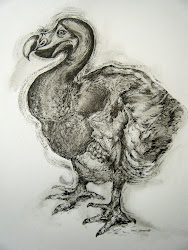 The Dodo Drawing