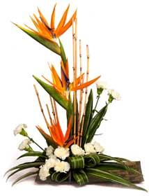 Flores, Mensaje de Amor, San Valentin