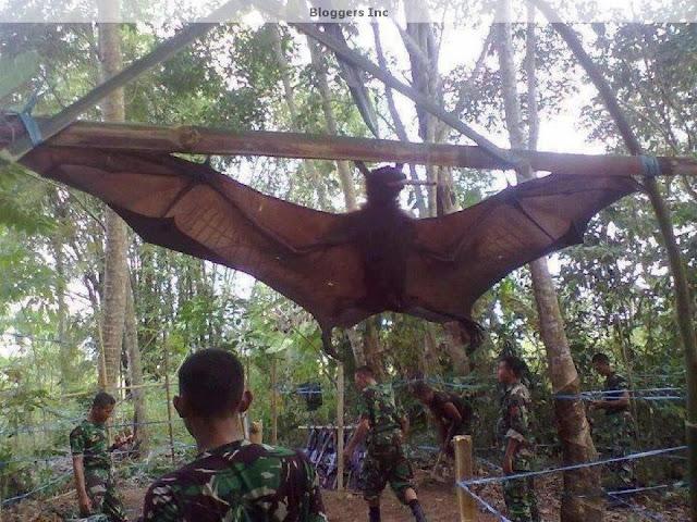 Giant+bat.jpg