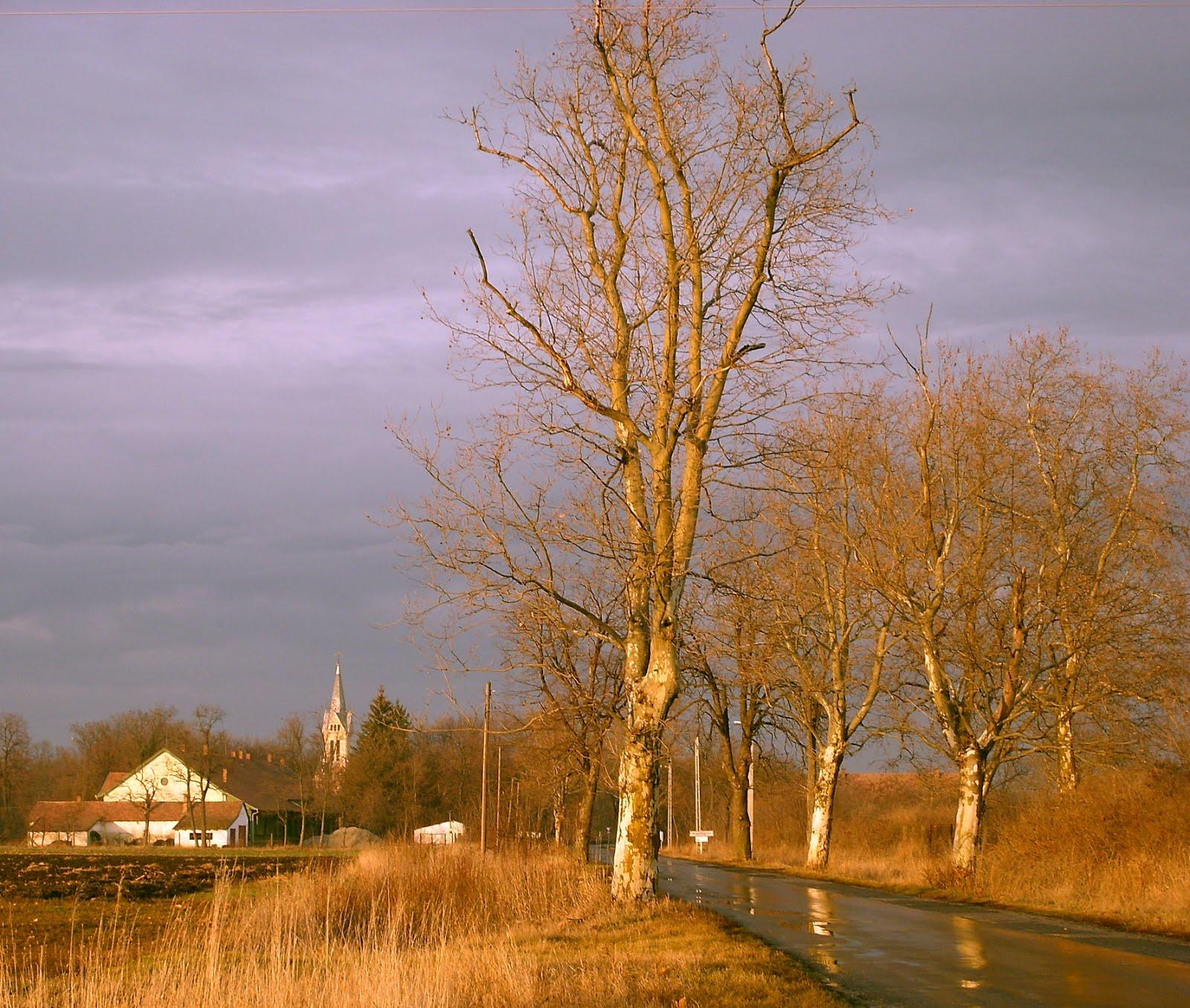 Vissza néz a nap eső után.