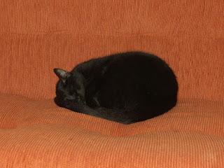 gato preto em forma de bola