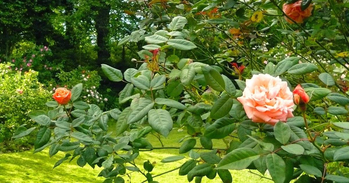Mi jard n mi para so mis incertidumbres acerca de los for Jardin los rosales