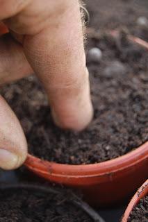 Seed pushing down