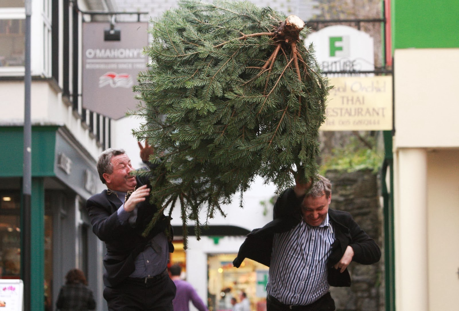 Irish Christmas Tree Throwing Championship could be a record breaker