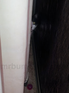 Image: Mr Bumpy hiding behind a curtain.