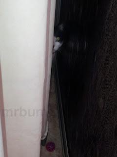 Image: Mr Bumpy hiding behind a curtain.