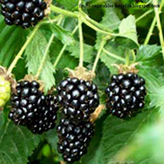 benefits_of_eating_raspberry_fruits-vegetables-benefits.blogspot.com(benefits_of_eating_raspberry_14)