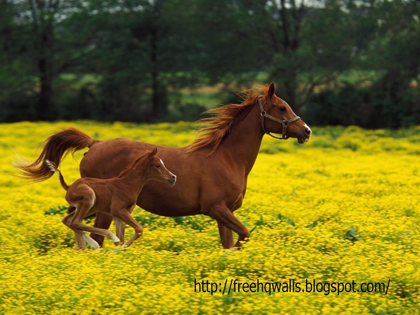 herbst hintergrundbilder kostenlos - Herbst kostenlose Hintergrundbilder (729 Fotos auf dem