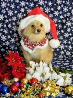 Božićne slike pas čestitke download free e-cards Christmas dog