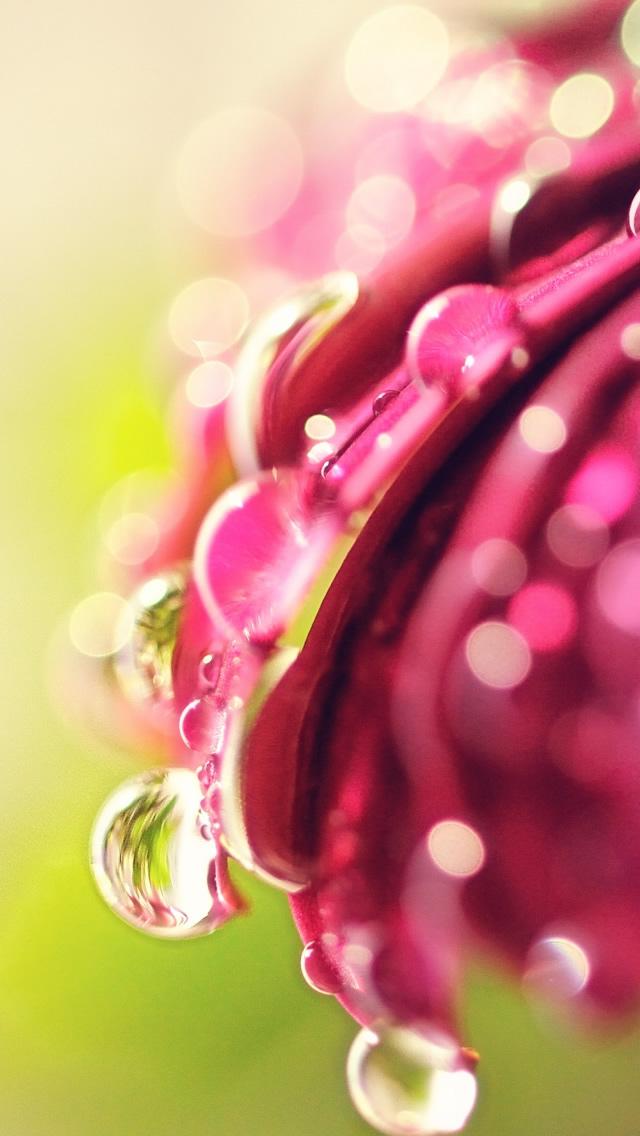 download Bokeh Drops Flower iPhone 5 HD Wallpaper