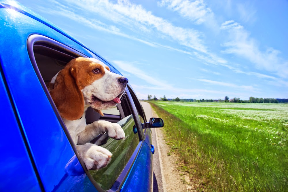 dog in car on road trip