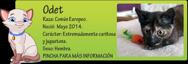http://mirada-animal-toledo.blogspot.com.es/2014/07/odet-hermosa-cachorrita-carey-en.html