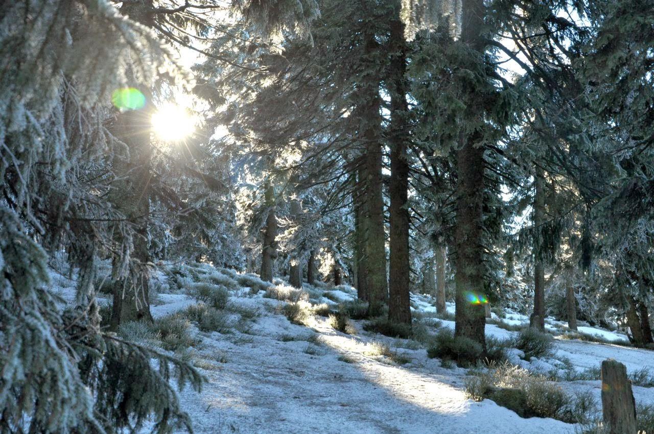 Słońce zza zimowych drzew