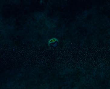 MAPA DE CALOR.UFO .ESFERICO.**