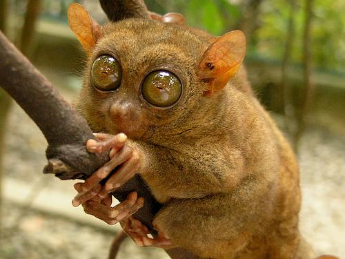 Amazing Animals: Amazing Animal Alphabet Series 2