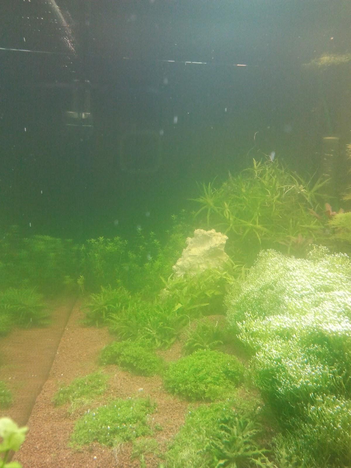 eau verte depuis une semaine 2012-04-28+21.32.22