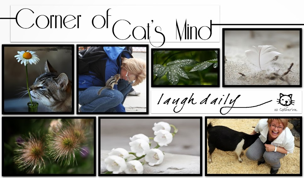 Corner of Cat's Mind