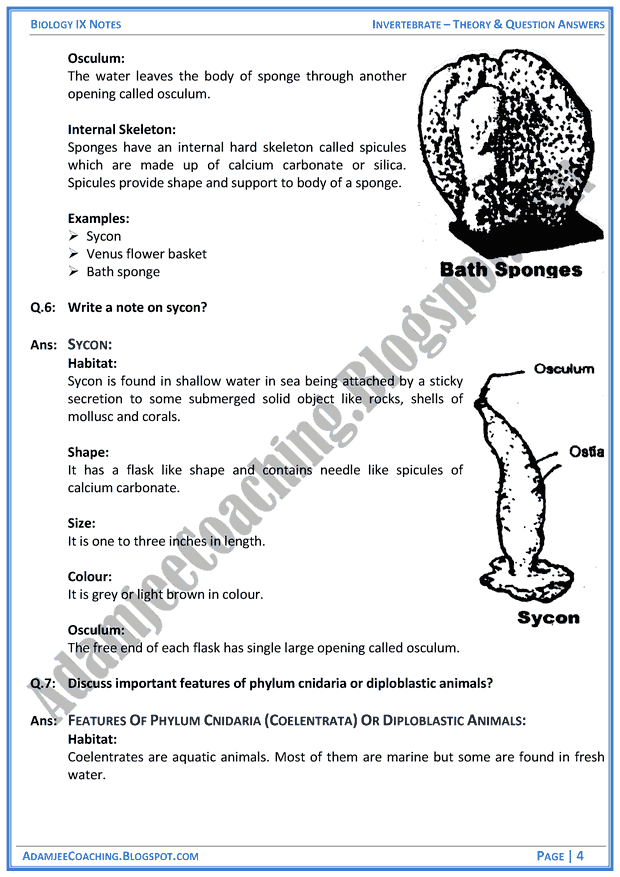 invertebrata-theory-notes-and-question-answers-biology-notes-for-class-9th