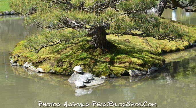 http://2.bp.blogspot.com/-y8A_GzGos7g/Tt-MkR2HtKI/AAAAAAAACig/l6ukR0P5-nE/s1600/Turtle%2Bimages%2B.jpg