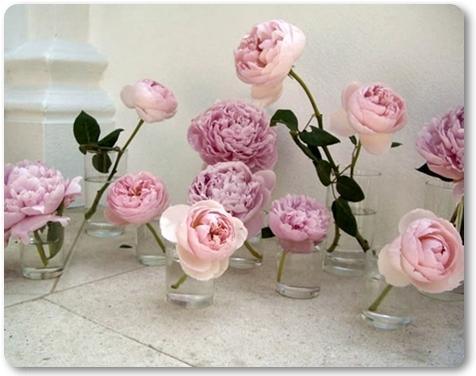 pioner i små vaser, peonies in bud vases