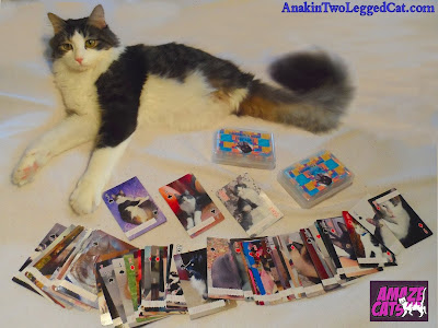 Anakin Two Legged Cat AmazeCats Next Top Cat Card Deck