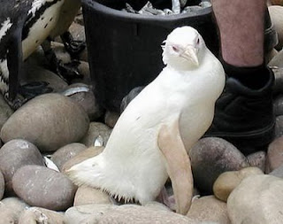 Funny Albino Animals