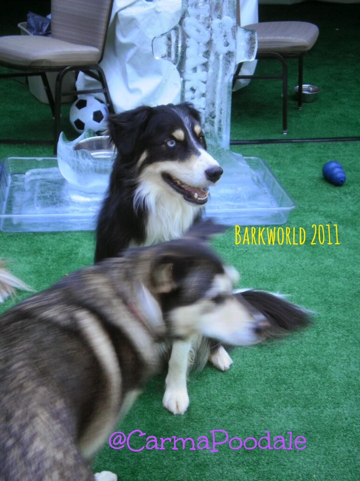 McGrady at Barkworld 2011