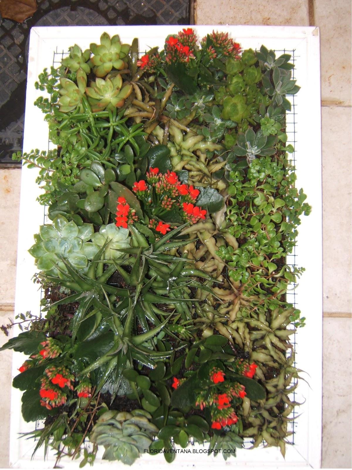 Florida Ventana Jardim Vertical  como fazer um quadro de suculentas