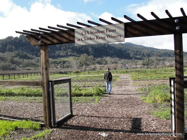 CIA Student Farm at Charles Krug Winery in St. Helena, California