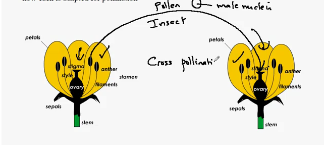 Insect Pollination Diagram Images Free Download