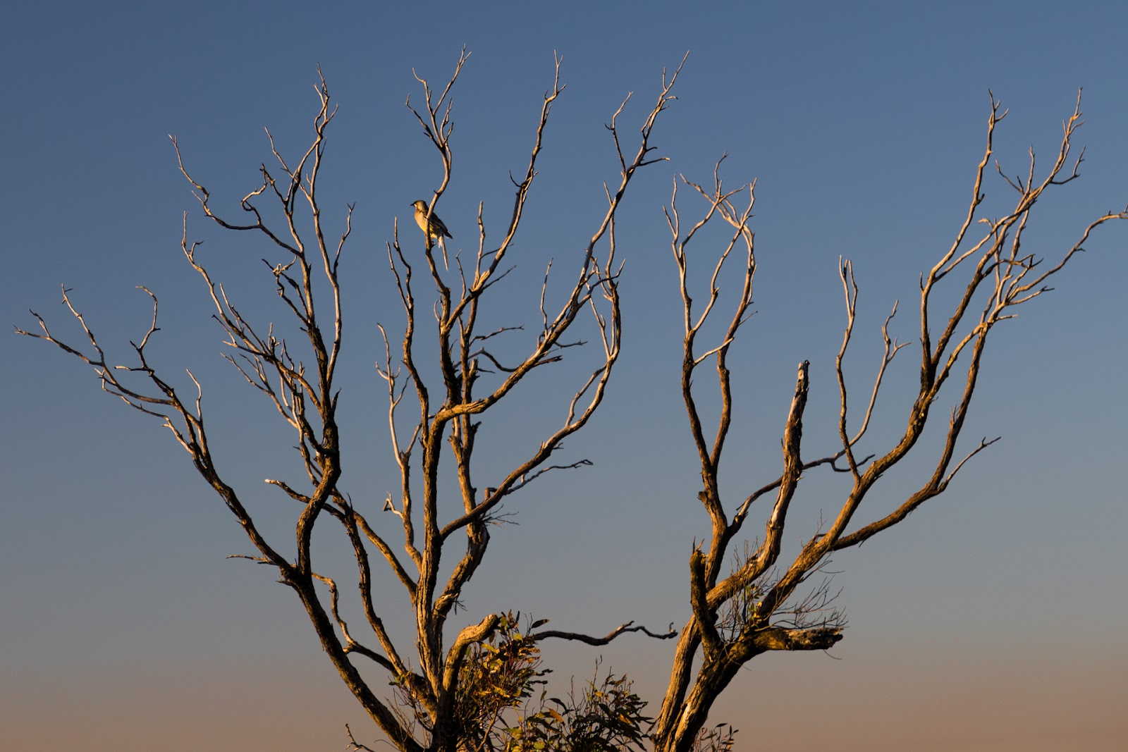 glow from setting sun on bird in tree