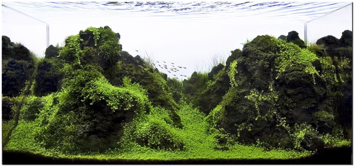 hồ thủy sinh bố cục đá nham thạch