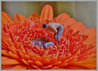 voor alle miniatuurtjes klik op de foto