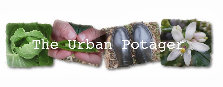 The Urban Potager