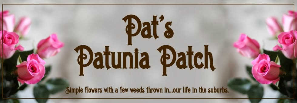 Pat's Patunia Patch