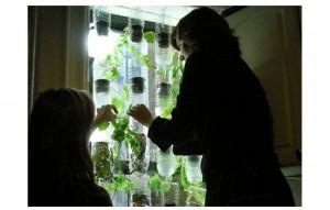 Jardín vertical, cultivar en tu ventana