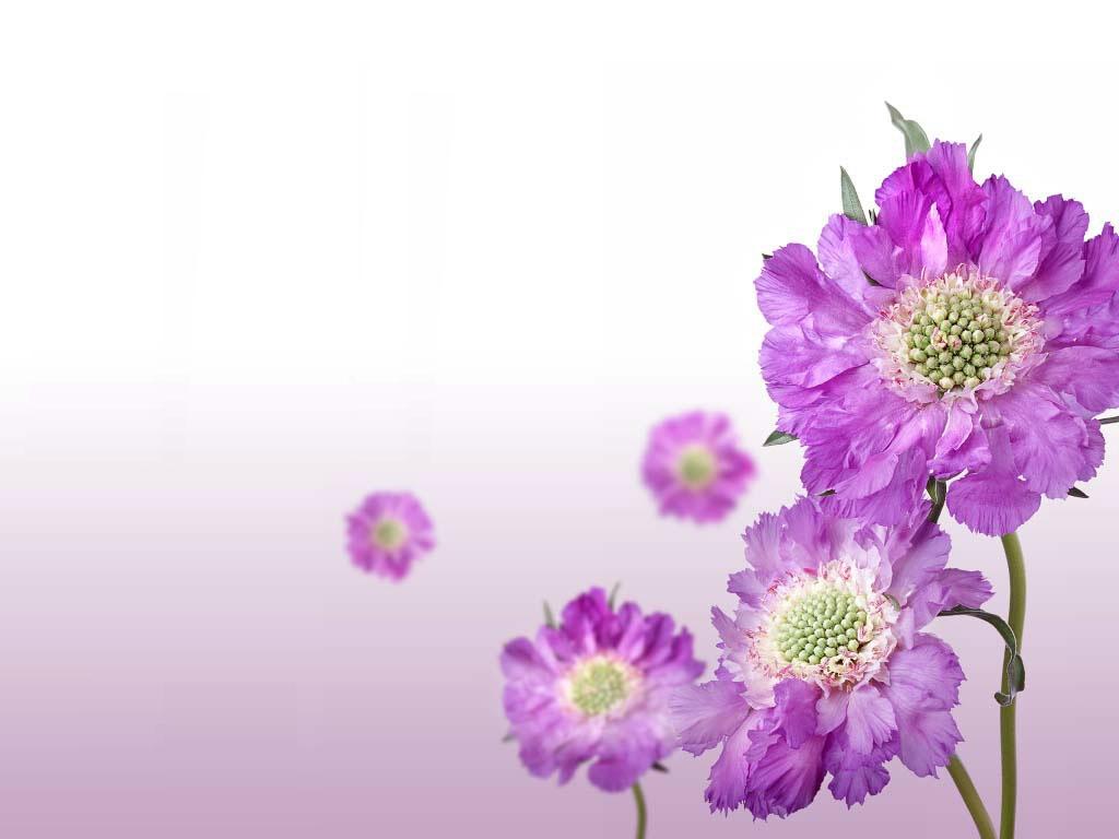 Awetya Images Digital background wallpaper free download