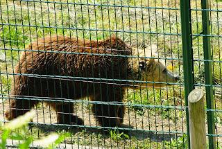 Proaza, Senda del oso, cercado osero