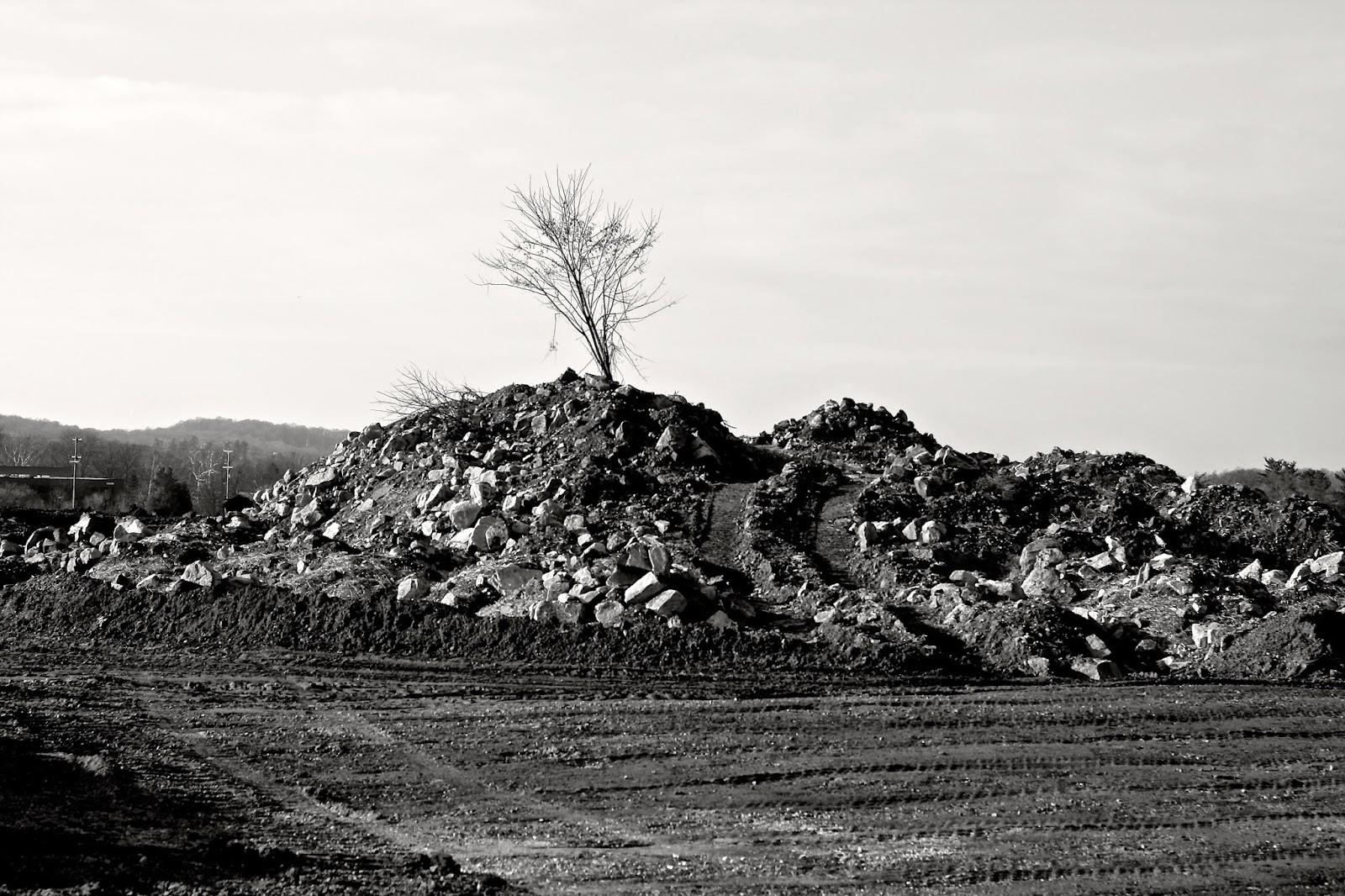 tree constructin site