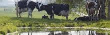 Foto cover Deltaplan Agrarisch Waterbeheer
