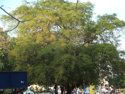 Church Velankanni
