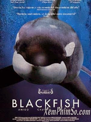 Phim Cá Mập Đen